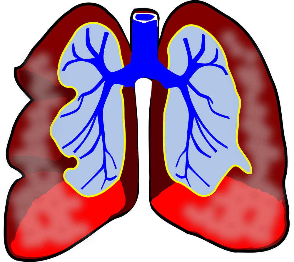 lungs-39981_1280.png