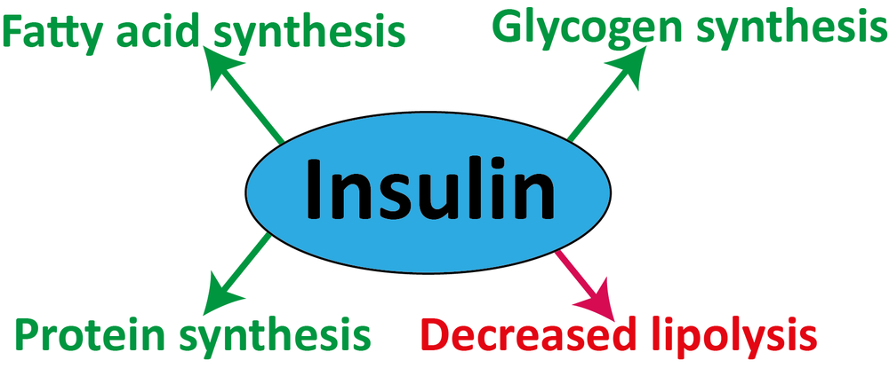 Insulin.png