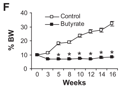 SCFA butyrate helps to control weight [11]