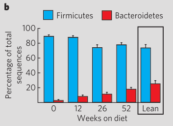 Ratio of Bacteroidetes to Firmicutes improved during diet [8]