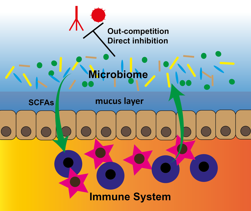 Logo immune system_thumbnail-03.png