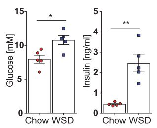 Increased blood glucose and insulin levels in mice on WSD [7]