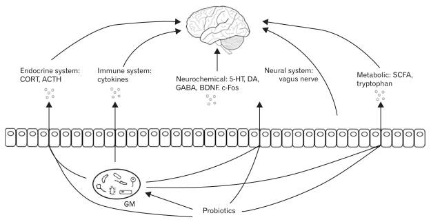 Influence of the gut bacteria on your brain [3]