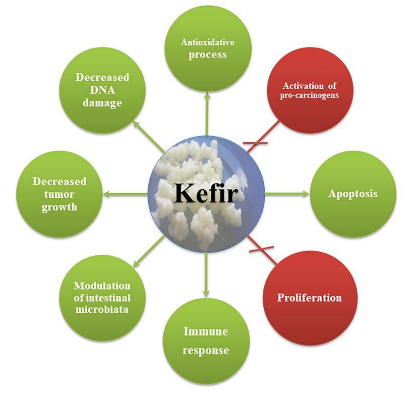 Anticancer properties of kefir [7]