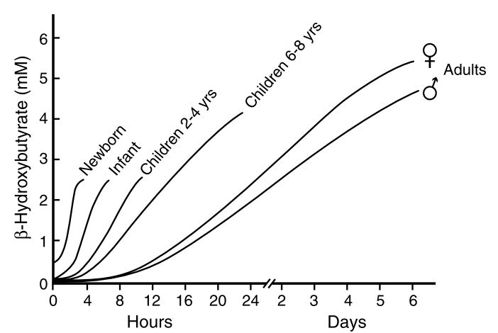 Levels of β-hydroxybutyrate in starving subjects of different ages [8]