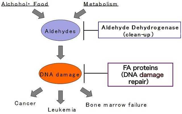 aldehydes and cancer.jpg