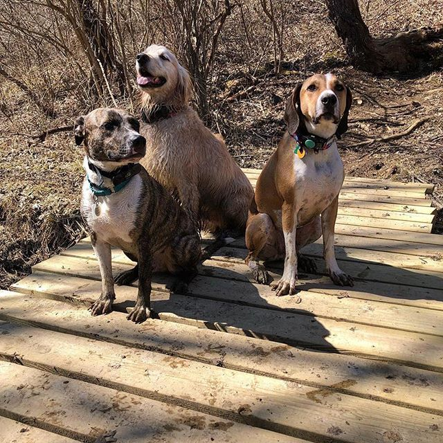 🎉Woo hoo 🎉  It's National Pet Day! 🐱🐶🐰🐭🐷🐦 #Repost @two.mutts ・・・ Beautiful afternoon spent hiking at Alum Creek with our friend Tucker! ☀️🐾❤️