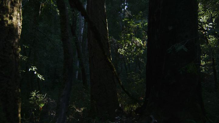 Redwoods9.jpg