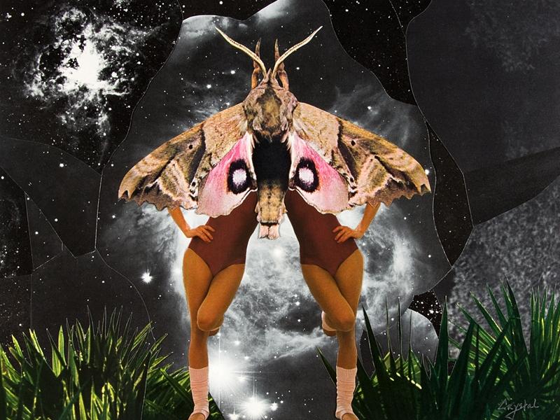 Moth Twin