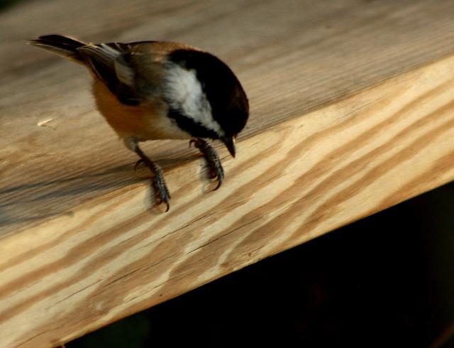 Take the leap, little bird!