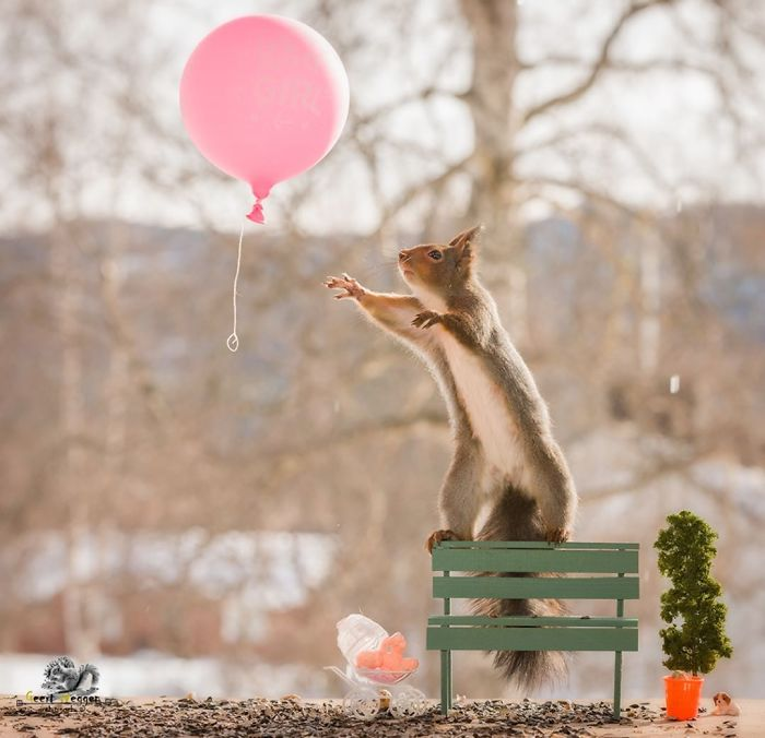 photographer-takes-pictures-of-squirrels-in-his-backyard-for-6-years-and-these-are-20-of-his-best-photos-16.jpg