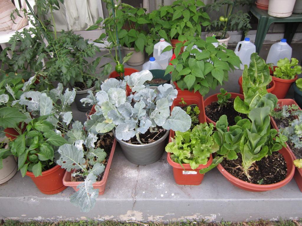 home garden renee