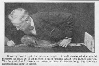 1930 rabbit measurez.jpg