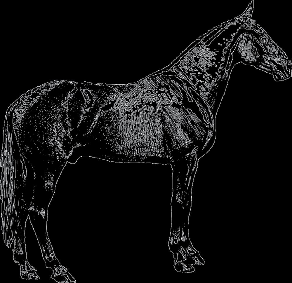 Logo_horse_black.png