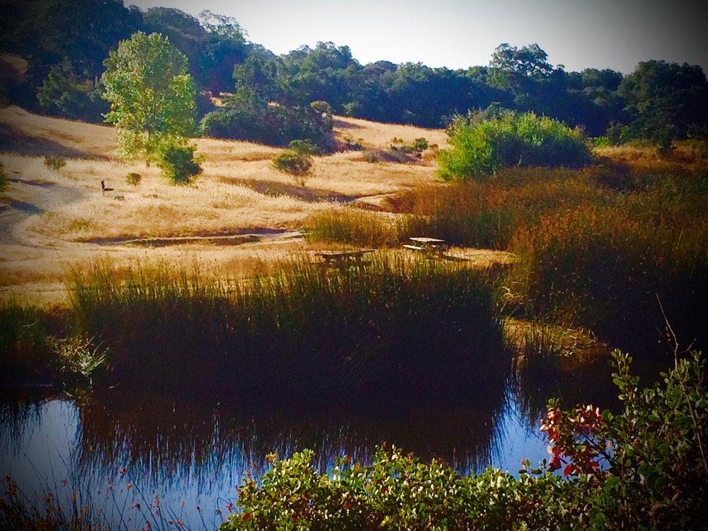 Foothill Park.jpg