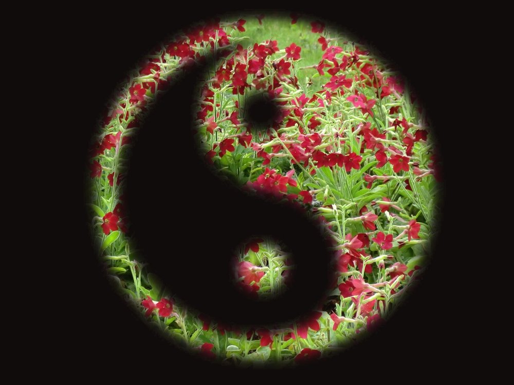 yin-yang-1712063_1280.jpg