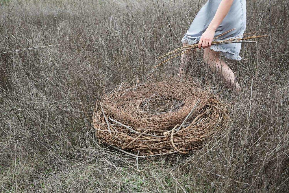 Nesting, 2014