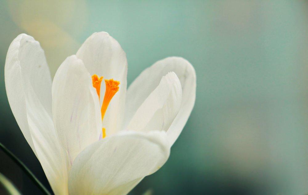 beautiful-bloom-blooming-355262.jpg
