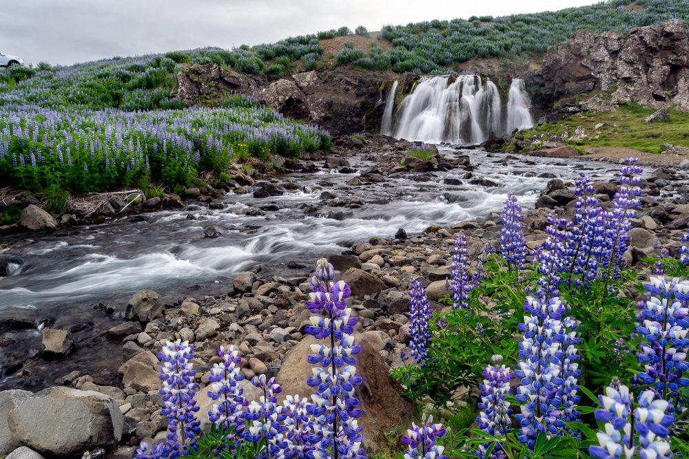 Flowerfall small.jpg