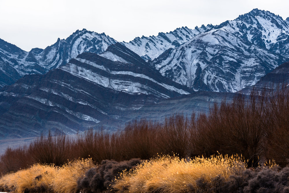 Colours of Winter Grass in Leh