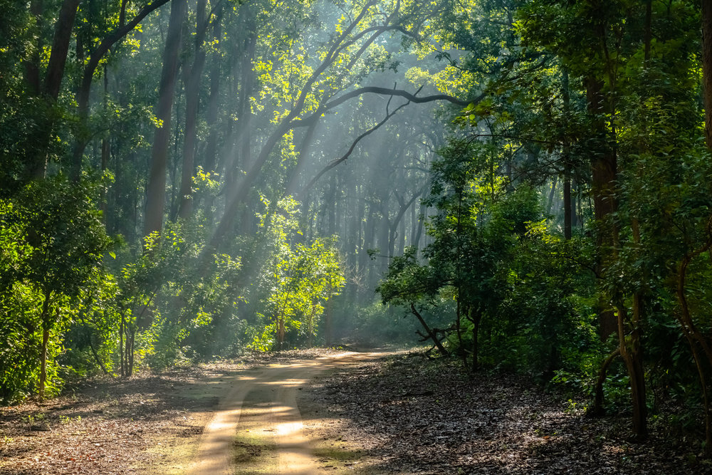 Jim Corbett Landscapes in the morning
