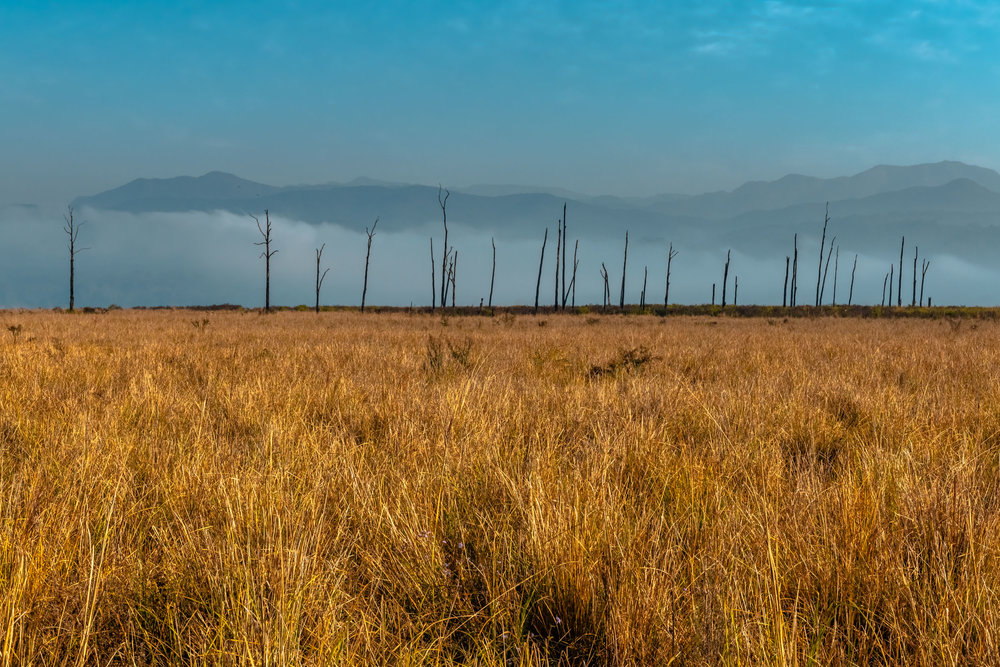 Winter Grasslands in Jim Corbett
