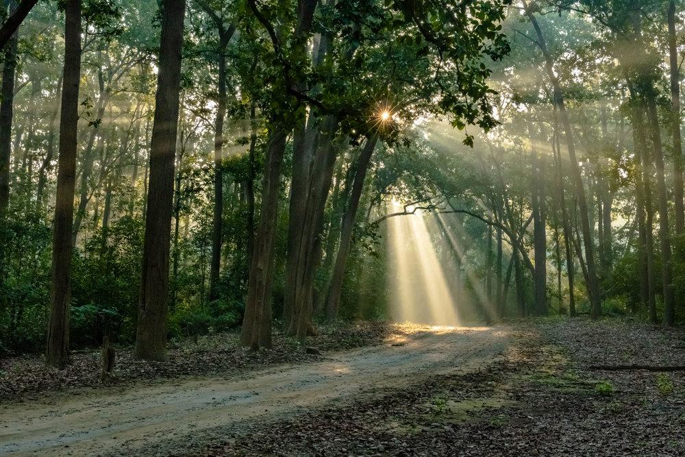 God beam in Jim Corbett National Park