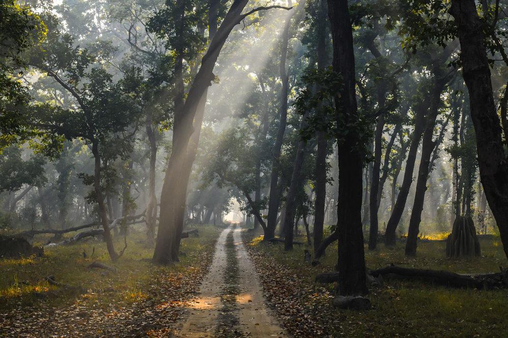 Sun beams in Dudhwa National Park