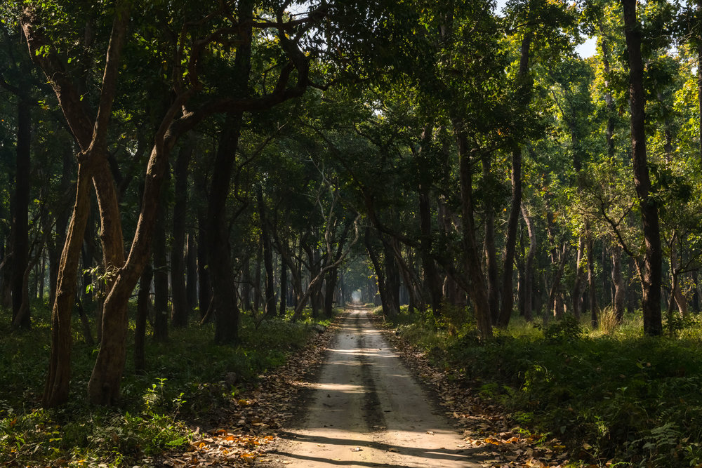Infinity roads at Dudhwa National Park