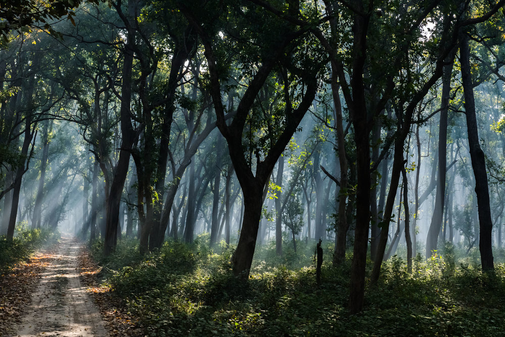 In Light and Shade at Dudhwa National Park