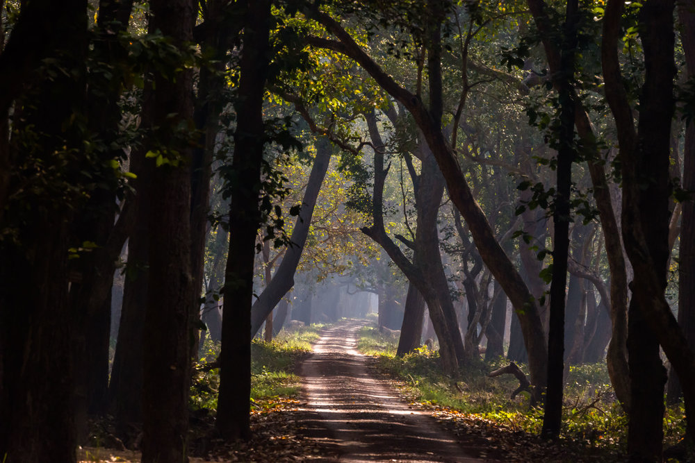 The Beauty road at Dudhwa National Park