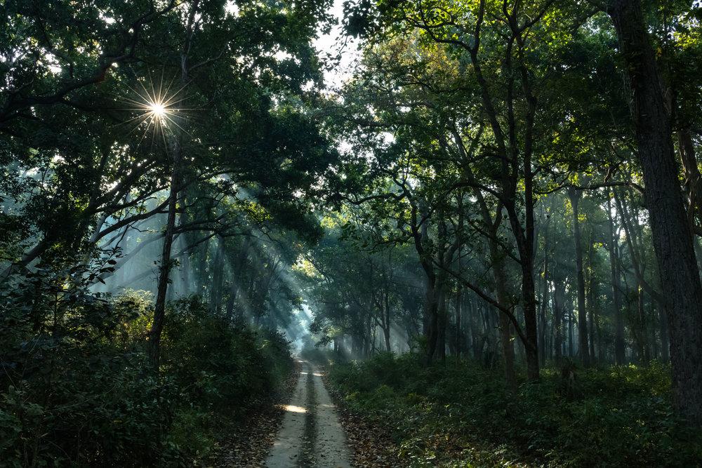 Sun burst with god beams at Dudhwa National park