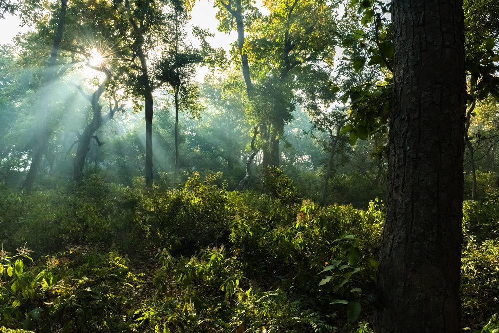 Inside the forest from top of the elephant at Dudhwa