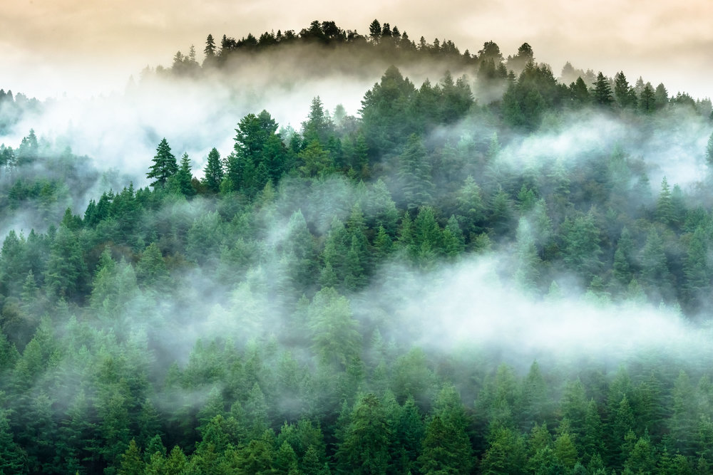Mist carpet over Alpine Trees