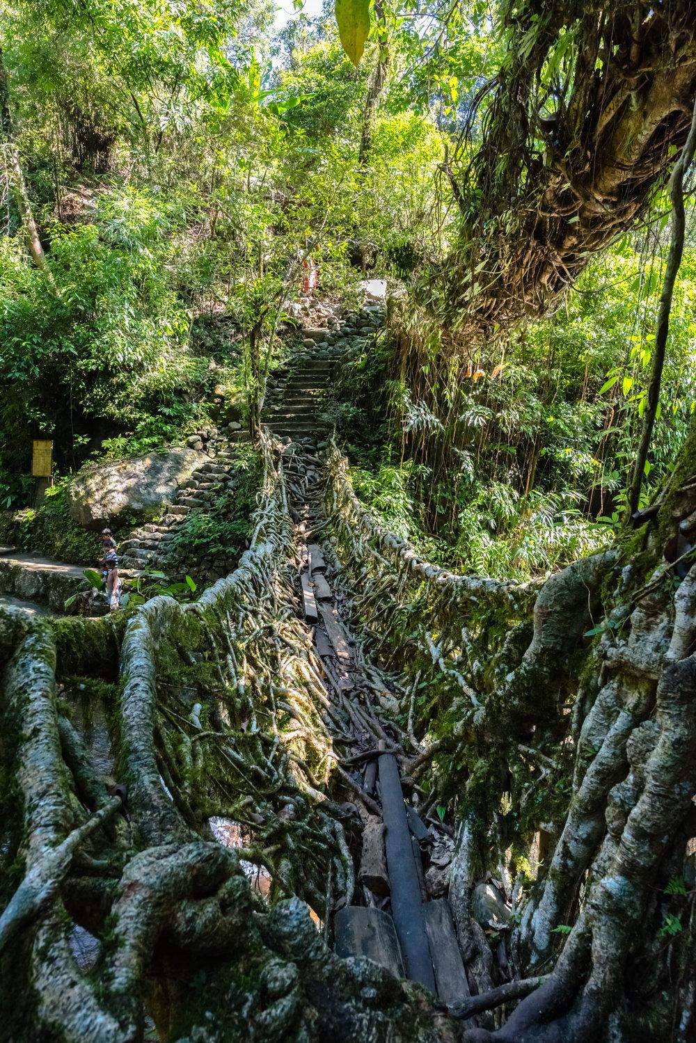 Double Root Bridge Journey 7.jpg