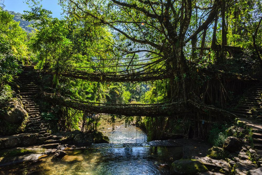 Double Root Bridge Journey 5.jpg