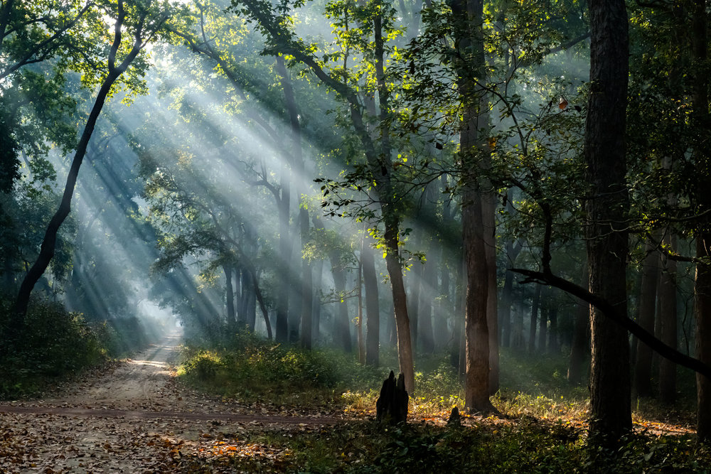 God beams at Dudhwa National Park