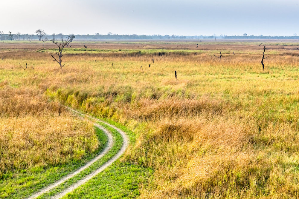 Grasslands of Dudhwa National Park