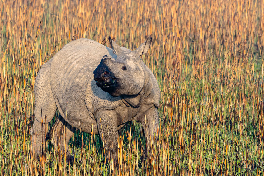 Rhino Cub picture captured from Elephant
