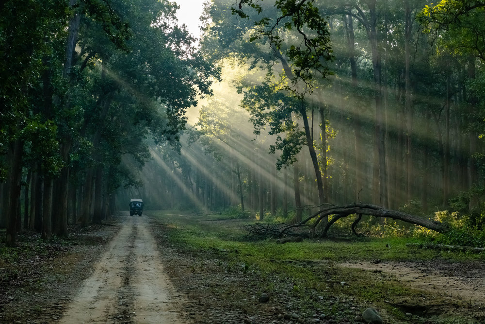 Canter Bus in Morning Safari