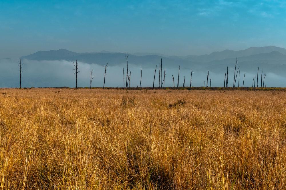 Grass Lands of Jim Corbett