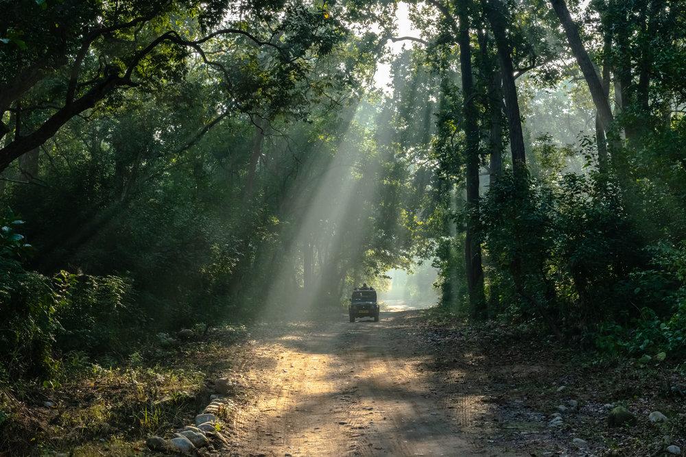 God beams during Morning safari