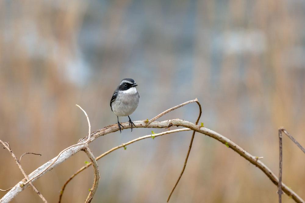 Bird in Grass Lands