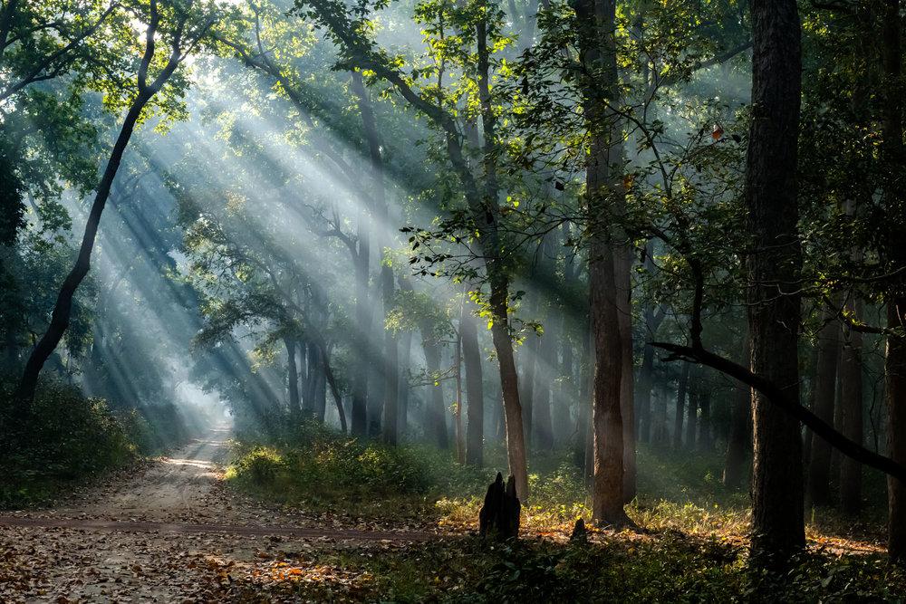 God Beams at Dudhwa National Park
