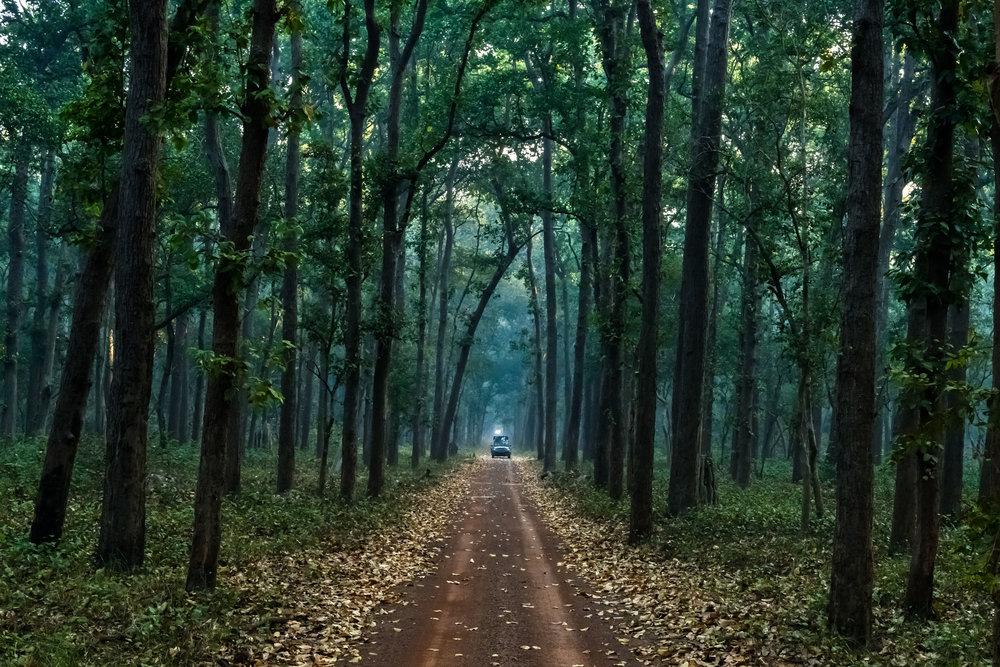 Infinite Canopy at Dudhwa National Park