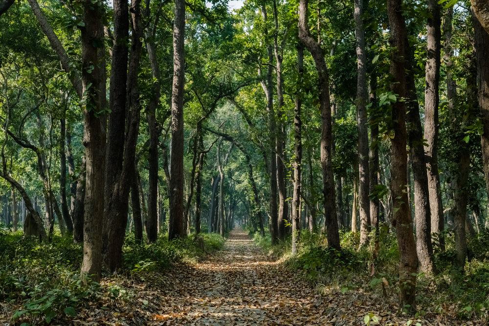 Untaken road in Dhudwa National Park
