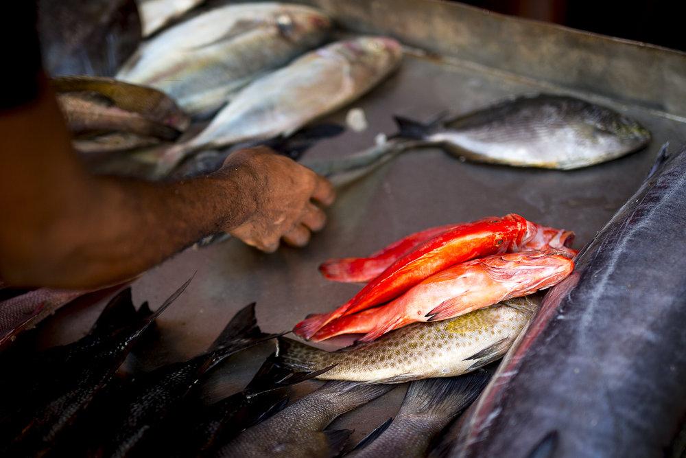vibrant_seafood_kerala copy.jpg