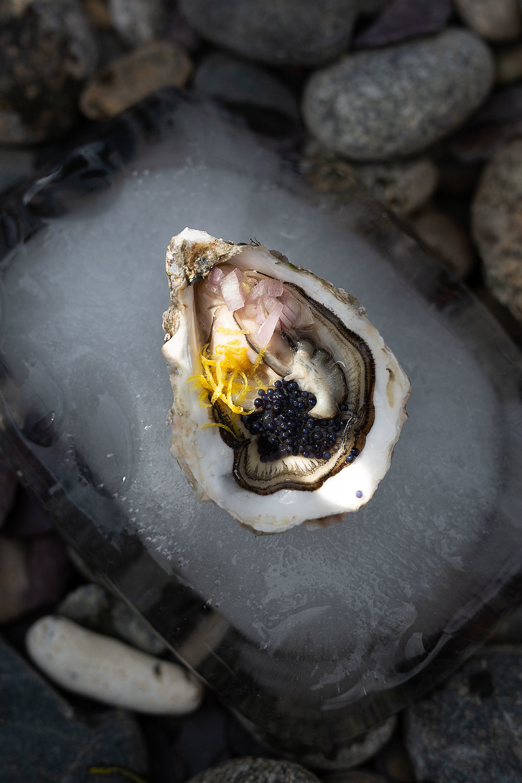 oyster_herm.jpg