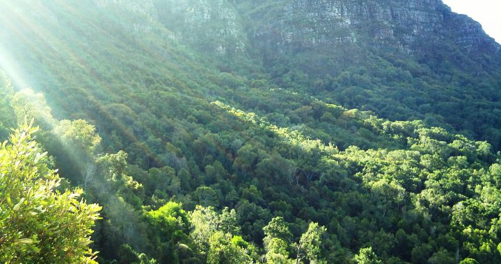 Southern-African forestry -