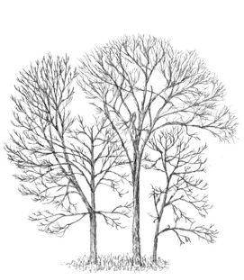 Good tree.jpg